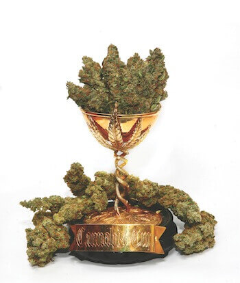 cannabis cup sieger bei mr hanf kaufen. Black Bedroom Furniture Sets. Home Design Ideas