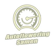 Autoflowering Samen