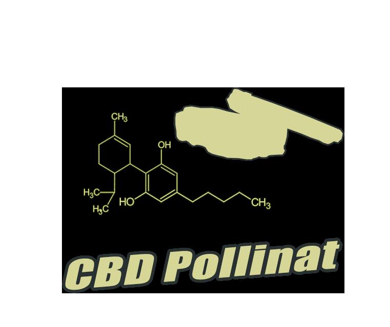 CBD Pollinat & Jellys
