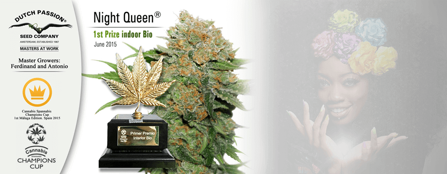 Night Queen 2015Dutch Passion Cannabis Cup Sieger