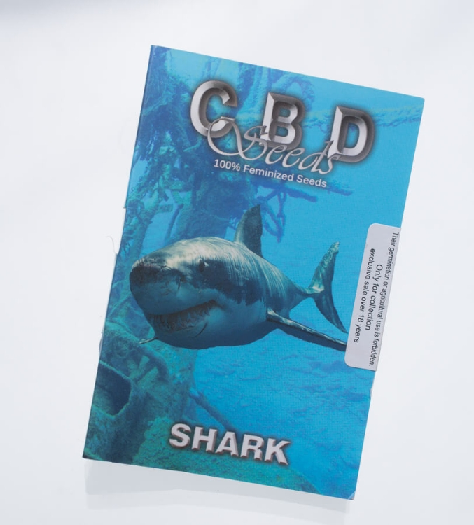 Shark (CBD Seeds)