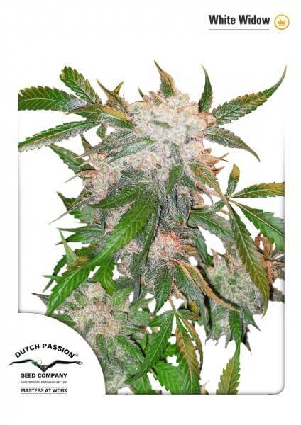 White Widow reg.
