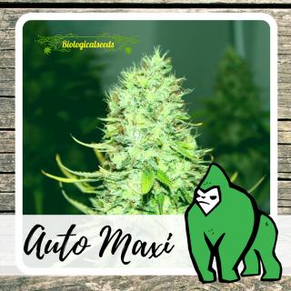 Auto Maxi