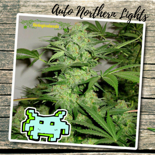 Auto Northern Light
