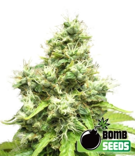 Medi Bomb # 1