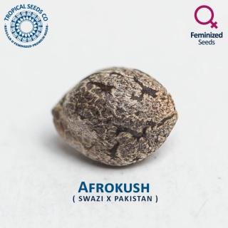 Afrokush