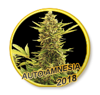 Amnesia Auto (Mr. Hide)