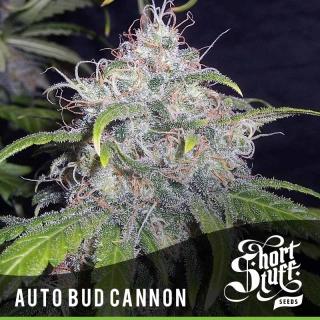 Auto Bud Cannon