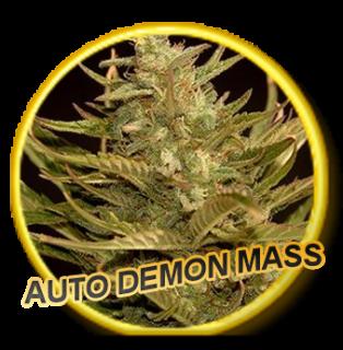 Auto Demon Mass