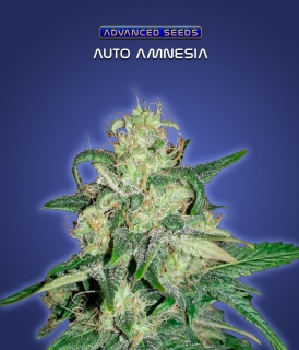 Auto Amnesia  (Advanced Seeds)