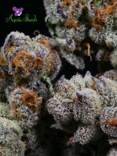 Blackberry Moonrocks