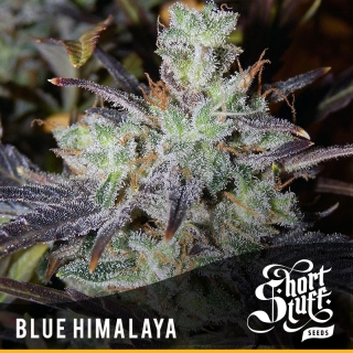 Blue Himalaya reg.