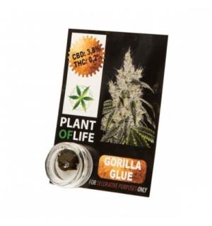 CBD Pollinat Gorilla Glue