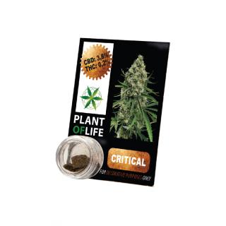 CBD Pollinat Critical