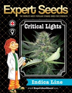 Critical Lights