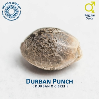 Durban Punch reg.