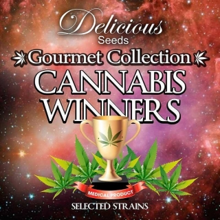 Gourmet Collection Cannabis Sieger 1