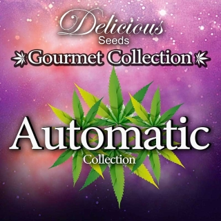 Gourmet Collection Automatik 1
