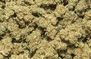 Lady Haze 9 % CBD, 3 g