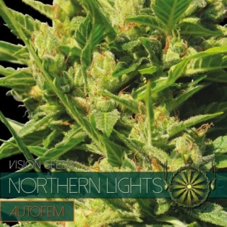 Northern Lights Auto (Vision Seeds)