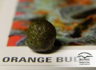 Orange Bud reg.