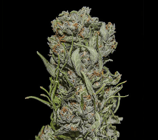 White Critical Express