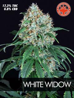 White Widow (Pure Seeds)